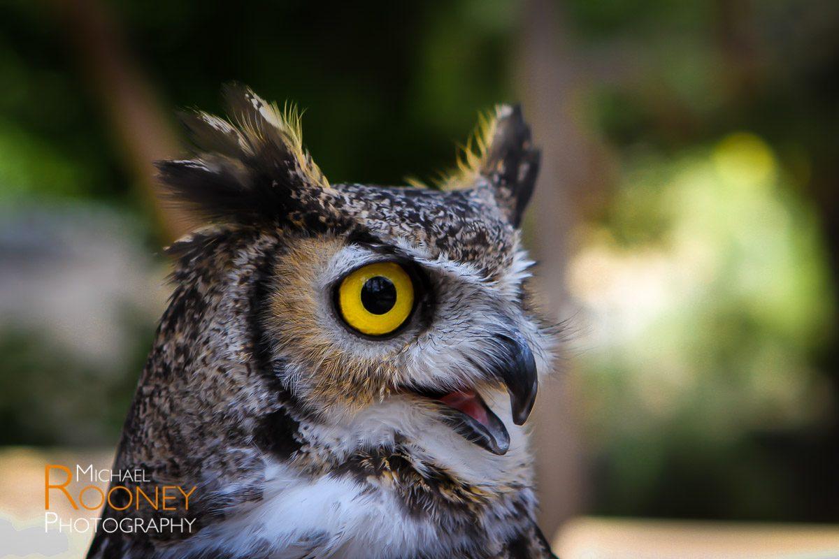 new mexico owl