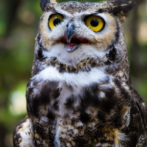 Owl in New Mexico