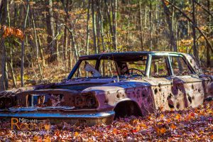 fall leaves abandoned car giuffrida park meriden connecitcut