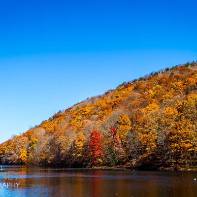 Fall foliage on the Chauncey Peak ridge next to the Bradley Hubbard Reservoir in Giuffrida Park in Meriden, Connecticut.