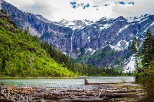 avalanche lake logs glacier national park montana