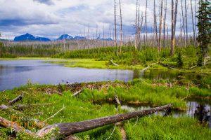 beaver dam glacier national park montana