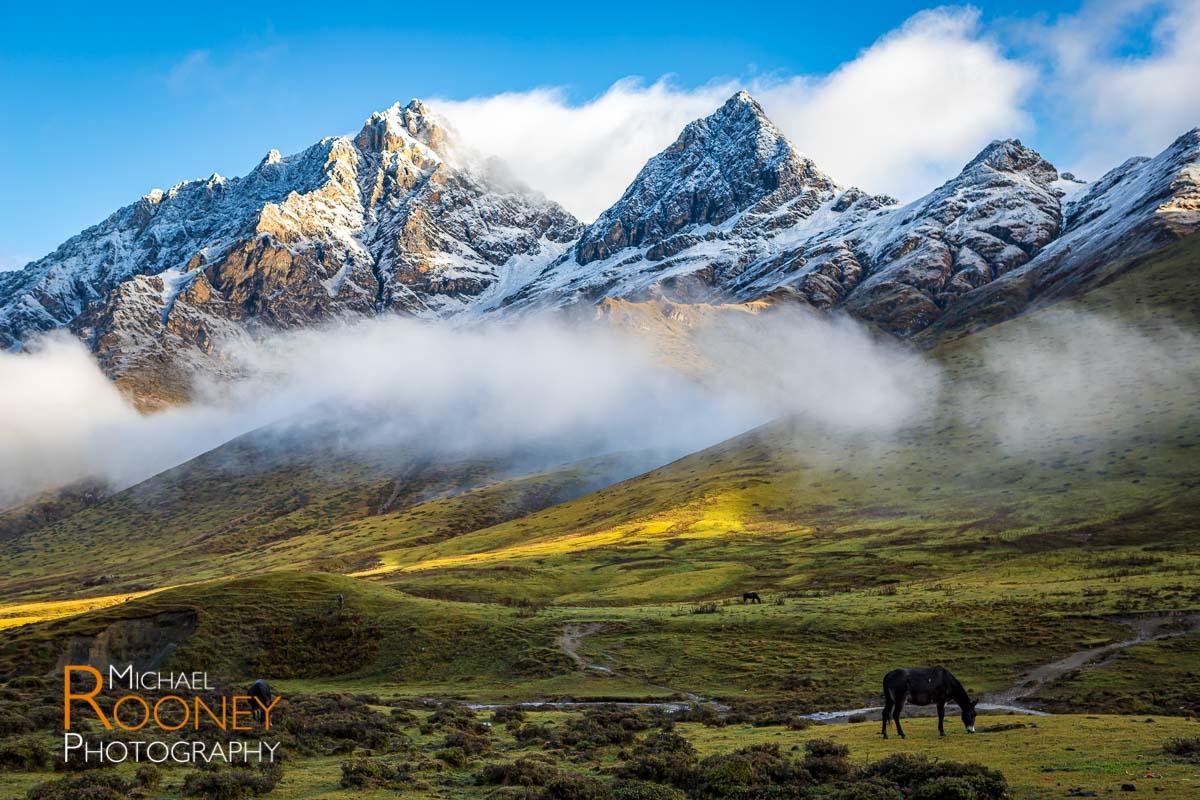 bhutan thombu la valley horse graze light morning fog mist mountain snow