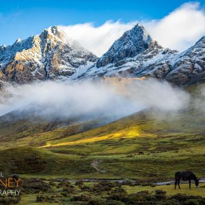 A horse grazes in the shadow of the mountains of the Thombu valley on a serene morning in Bhutan