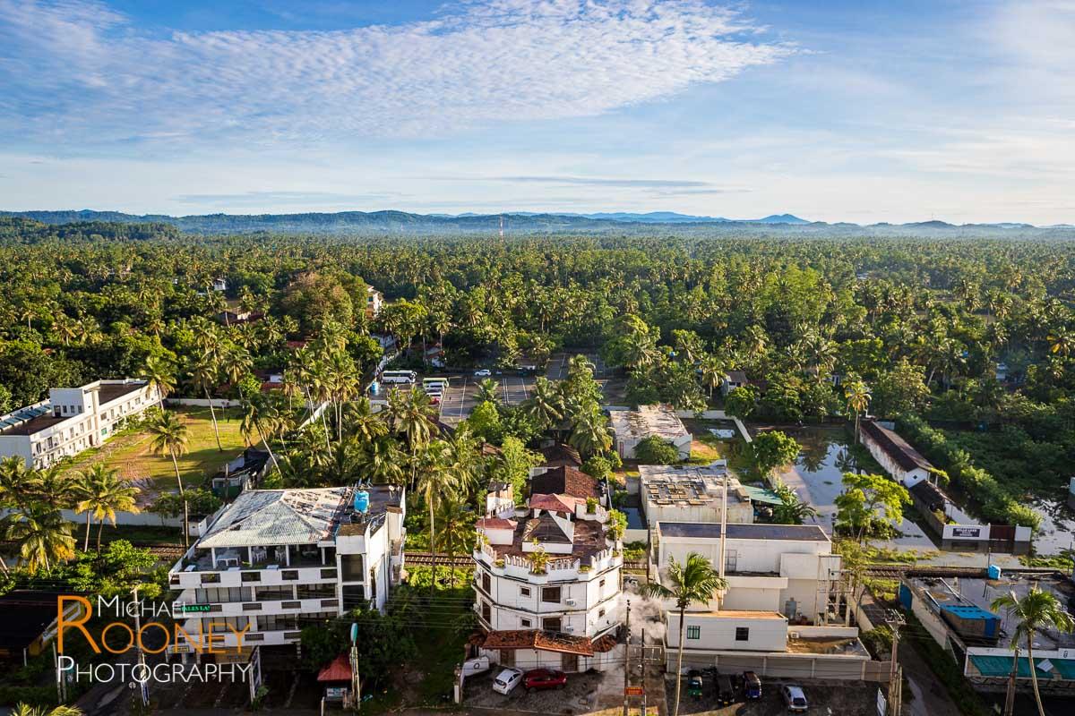 palm trees forest sunny weligama sri lanka