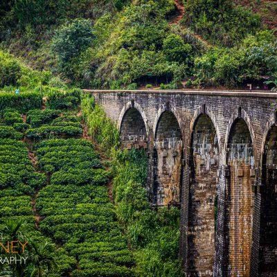 The famous Nine Arch Bridge for trains in Ella, Sri Lanka next to a hillside tea field